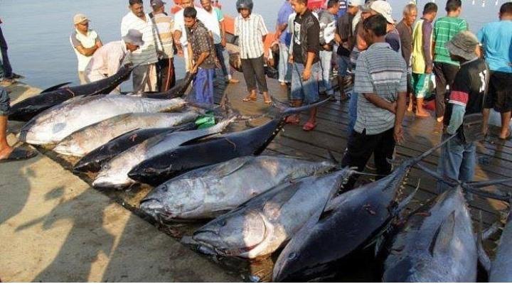 Bisnis abon ikan tuna